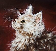 Maine Coon Kitten by Christina Frenken