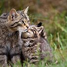 Big Cat, Little cat by Peter Denness