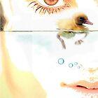Tear Duck by Tom Golden