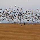Goose Vortex II by Davin Andrie