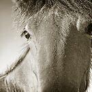 Howdy by Carolann23