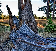 Tree Stump by Arelle Hall