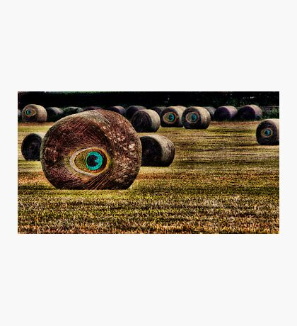 The Eyes, OMG, The Eyes... Photographic Print