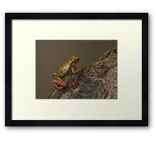 Spring Peeper 2 Framed Print