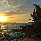 Driftwood Sunset in Key West, FL by Susanne Van Hulst