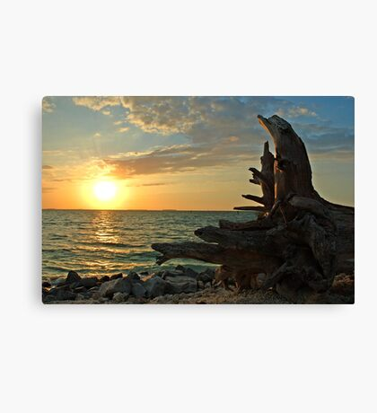 Driftwood Sunset in Key West, FL Canvas Print