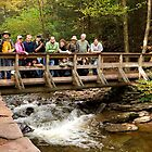 Rickett&#x27;s Glen - Welcome PA Group by Mark Van Scyoc