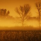 Autumn morning by Angela King-Jones