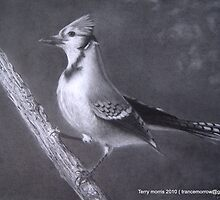 Bluejay by terry morris