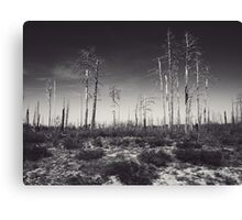 Burnt Landscape Canvas Print