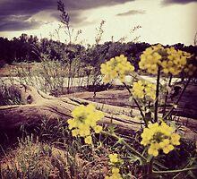 Fallen Log with Wildflowers Beside Riverbank by JULIENICOLEWEBB