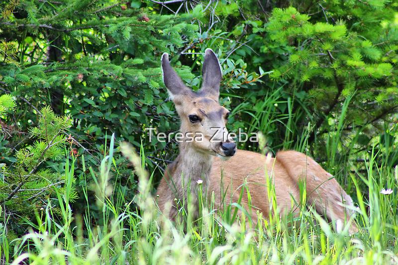 Wildlife in Waterton Lakes NP by Teresa Zieba