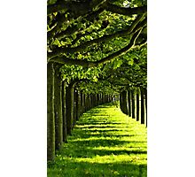 Green Allee Photographic Print