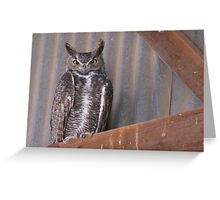 Great Horned Owl ~ Rafter Raptor  Greeting Card