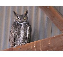 Great Horned Owl ~ Rafter Raptor  Photographic Print