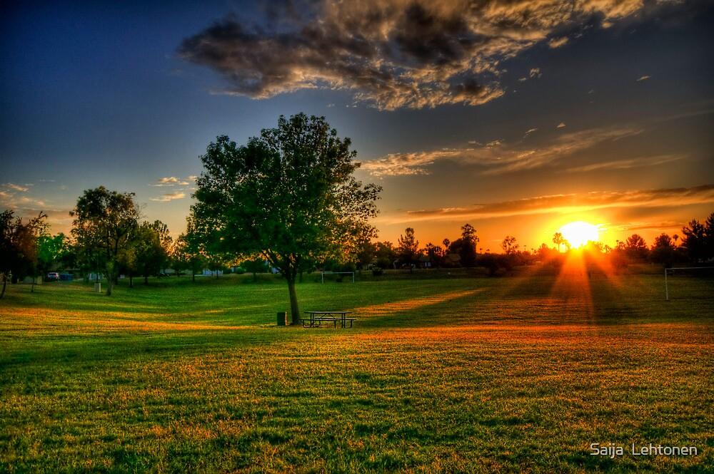 Sunset at the Park  by Saija  Lehtonen