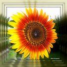Mirrowed Sunflower by Mechelep