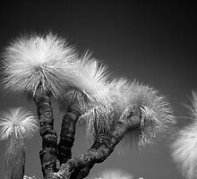 Xanthorrhoea Preissii IR II by Sean Farrow