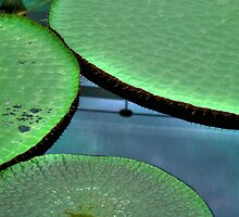 Lilly Pads by sedge808