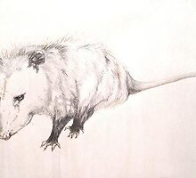 Determined Opossum by Cameron Hampton