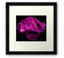 Rose Petal Dew Framed Print