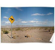Desert Donkey Poster