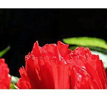 Poppy Pretty Photographic Print