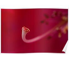 Candy Stripe Stamen Poster