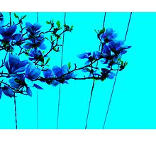 blue flower wire Photographic Print
