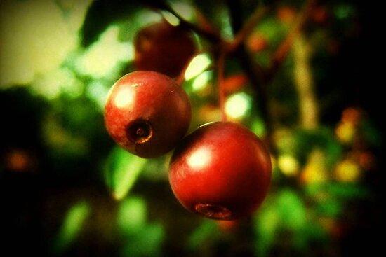 Autumn Berries © by Dawn M. Becker