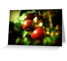 Autumn Berries © Greeting Card