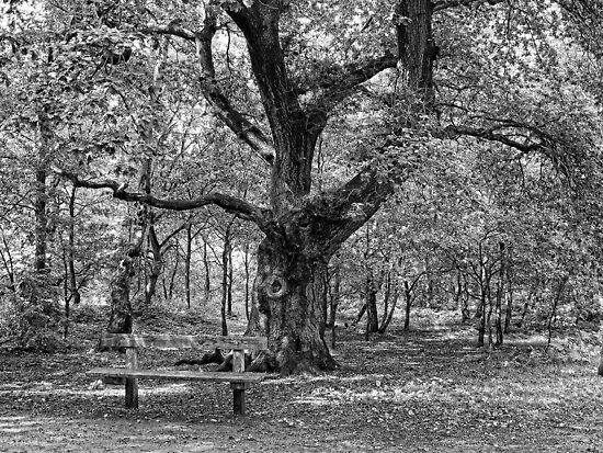 A Rest in the Fantastical Sherwood Forest by Ryan Davison Crisp