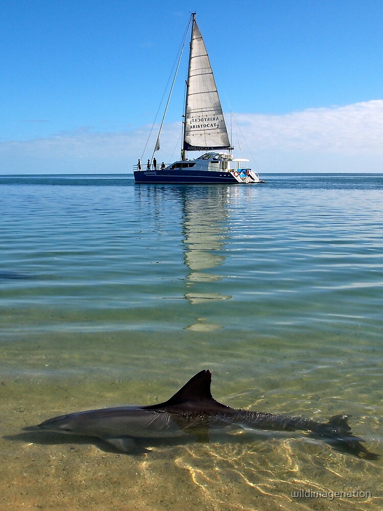"""Monkey Mia Magic"" Shark Bay, Western Australia by wildimagenation"