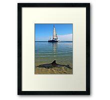 """Monkey Mia Magic"" Shark Bay, Western Australia Framed Print"