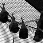 Hanging around by Alastair Faulkner
