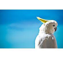 Whitsundays Sulphur Crested Cockatoo Photographic Print