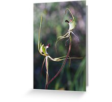 Hairy Spider Spider Orchid - Arachnorchis villosissima Greeting Card