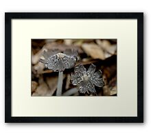 Inkcaps Framed Print