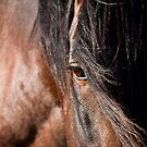 Wild Stallion Eye by Sue Ratcliffe
