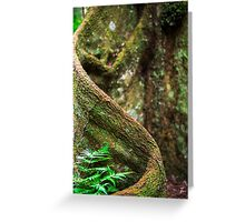 Forest tree in Queensland Greeting Card