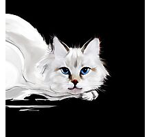 White and black cats Photographic Print