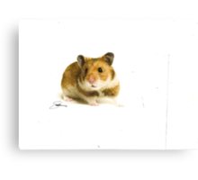 Ginger snap Canvas Print