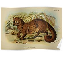 A Handbook to the Carnivora Richard Lydekker 1886 0306 Common Palm Civet Poster