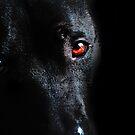 The Black Dog by Nicola Smith