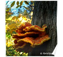 """Vibrant """"Chicken of the Woods"""" fungi Poster"""