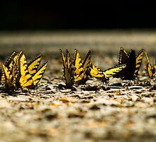 Butterflies on Asphalt by Jimmy Phillips