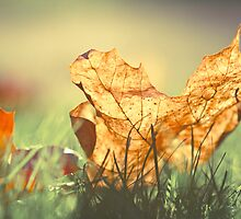 Autumn light by Alice Kent