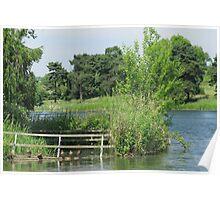 Sitting Ducks - Thornton Reservoir, Leicestershire, UK Poster