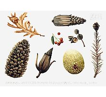 Natural objects - Autumn leaves, fir cones and fruit. Photographic Print