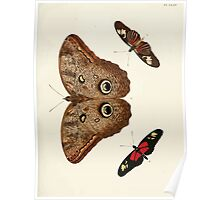 Exotic butterflies of the three parts of the world Pieter Cramer and Caspar Stoll 1782 V1 0183 Poster